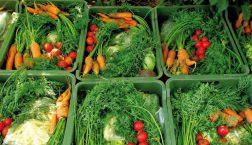 Közösség által támogatott mezőgazdaság: illúzió vagy alternatíva?